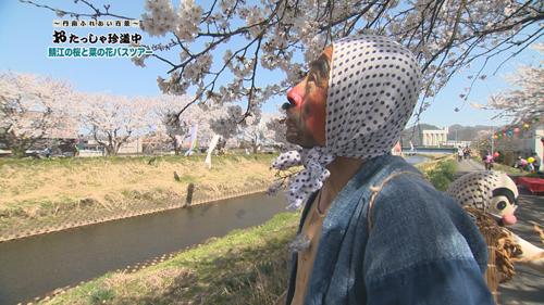 【おたっしゃ珍道中】「桜と菜の花ツアー」で田吾作両手に花!の巻